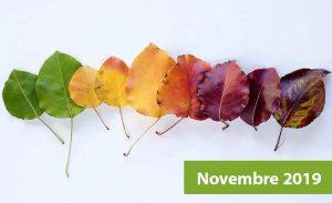 Lettre d'information du mois de novembre